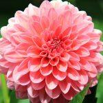flower-197343_1920