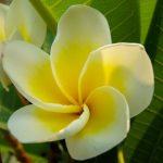 flower-196711_960_720